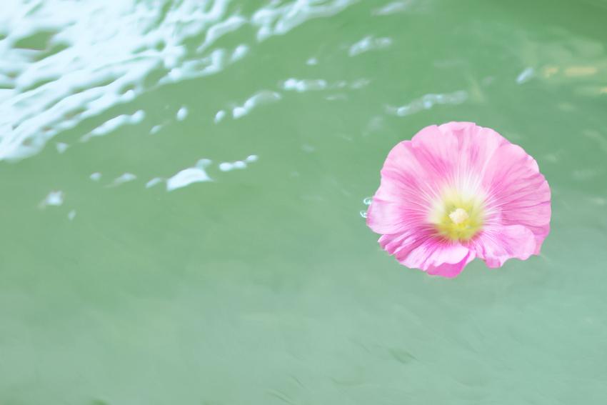 fleur sur l'eau