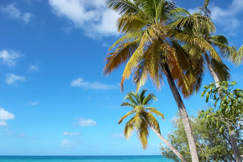 Artlex blog voyage vacances Martinique