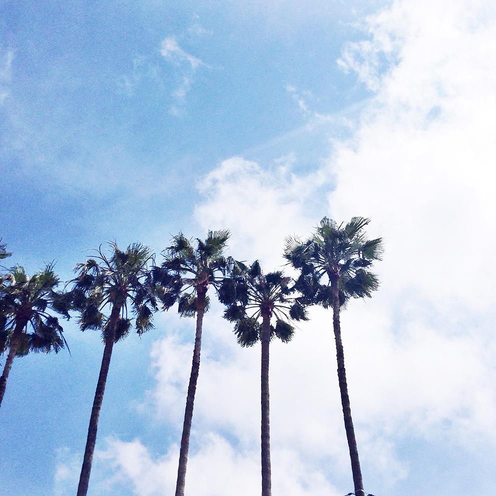 cannes palmiers blog artlex