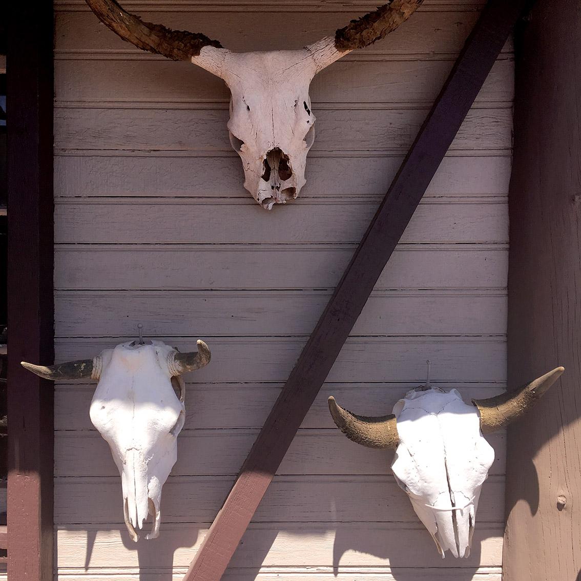 cow-bones-road-66