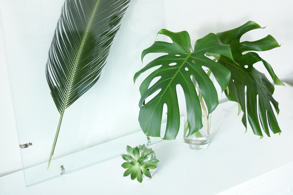 decoration-monstera