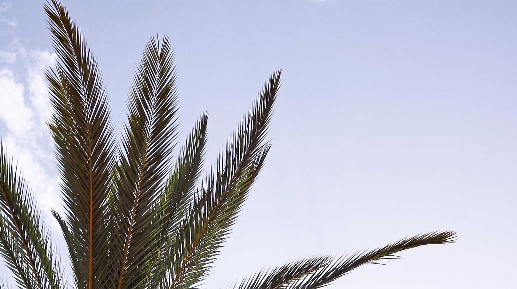 feuille-de-palmier